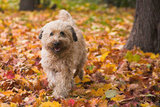 A joyful jaunt through a carpet of leaves. Source: Flickr user Petteri Sulonen