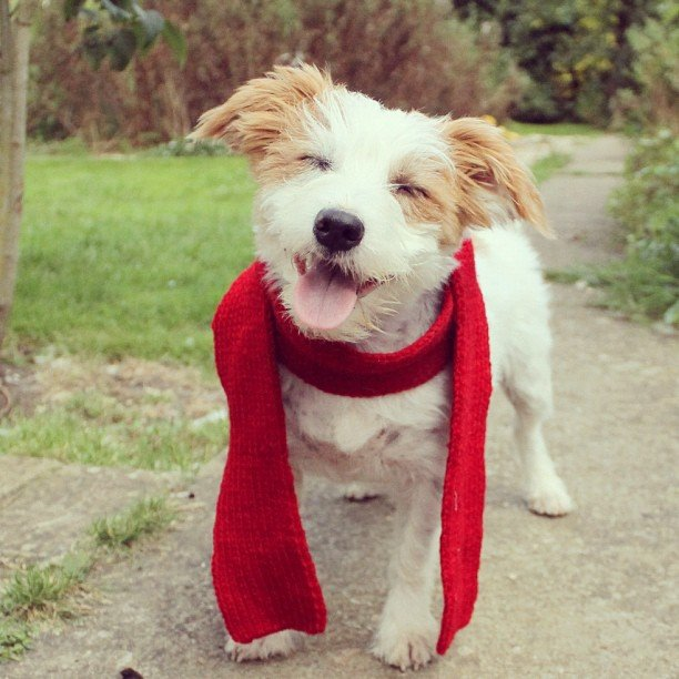 I appreciate a jaunty accessory. Source: Instagram User ginny_jrt