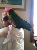 Chris Benz spent some quality time with his aunt's parrot. Source: Twitter user cmbenz