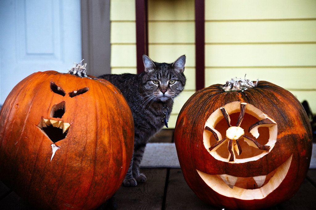 Even if your human maintains an odd pumpkin-carving aesthetic, one can learn to coexist. Source: Flickr user scragz