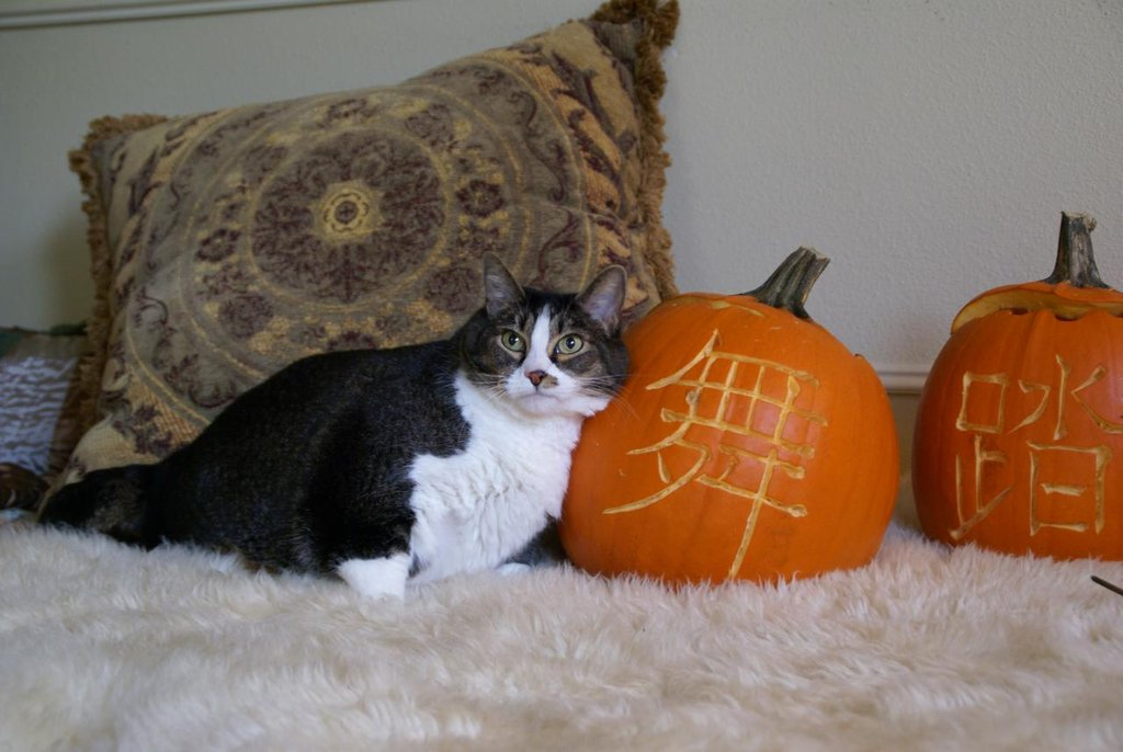 Who needs a pillow when you have a beautifully carved pumpkin? Source: Flickr user kaoruokumura