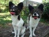 Luke and Louie, Papillons