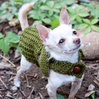 Best Fall Sweaters For Dogs and Cats