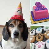 Let Them Eat Pupcakes: 10 Birthday Treats For Your Special Pooch