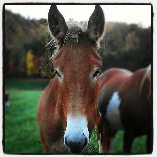 Shades of Mule