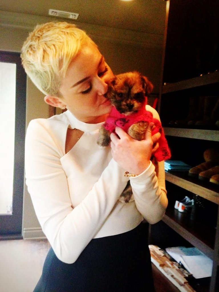 Miley Cyrus cuddled her newest family addition, Penny Lane. Source: Twitter user MileyCyrus