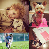 Pets and Sugar: See Our Employees' Best Friends!