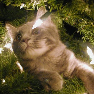 Cute Pictures of Pets Stuck in Christmas Trees