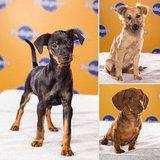 The Supercute Starting Lineup of Puppy Bowl IX