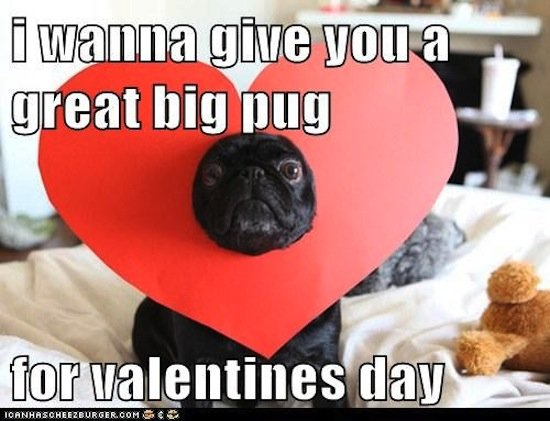 Puns, and pugs, are always welcome on the big day.  Source: Cheezburger