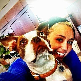 Cute Celebrity Pet Pictures | January 2013