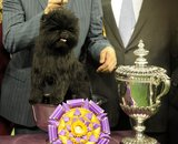 Banana Joe posed after taking the top prize at Westminster.