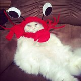 So, yeah, I'm a crab. Source: Instagram user georgethekat