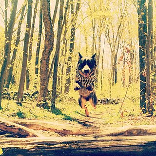Dogs Jumping | Pictures