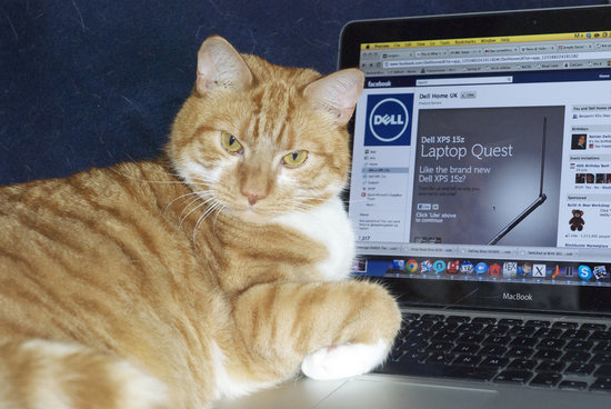 """Oh, you need to use your laptop? Now's not a good time."" Source: Flickr user mseckington"