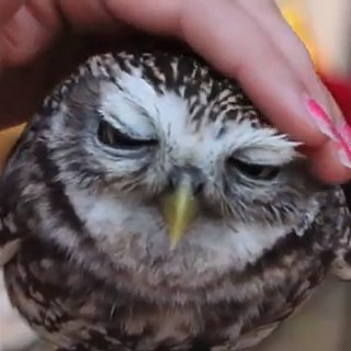 Cutest Baby Animal Viral Videos