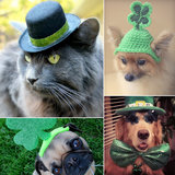 Celebrate St. Patrick's Day With Your Furry Friend