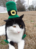 Cat in a Green Hat
