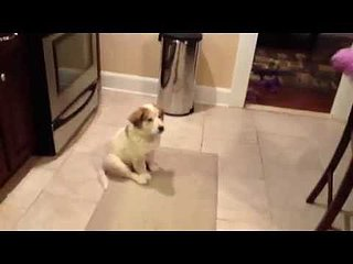 Cute Puppy Can't Catch | Video