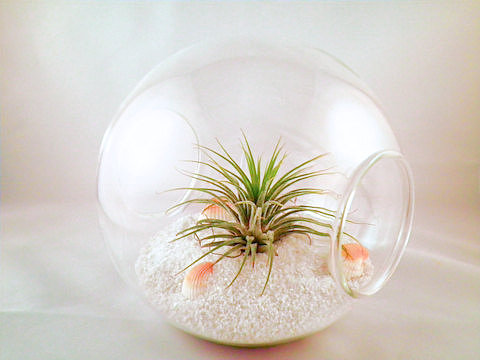 A Day at the Beach Terrarium
