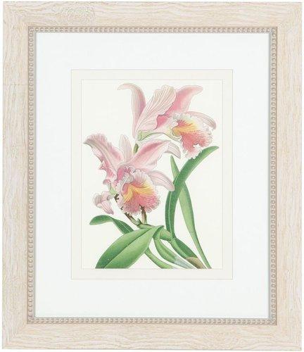 Chantilly floral studies VI