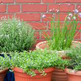How to Plant an Herb Garden