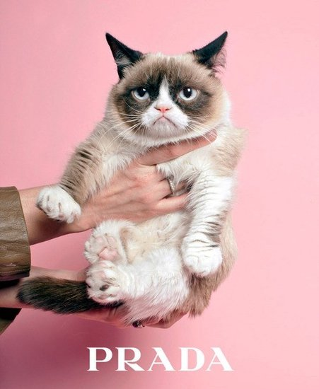 We wish this dream would come true: Grumpy Cat as Prada model.  Source: AnOther Magazine