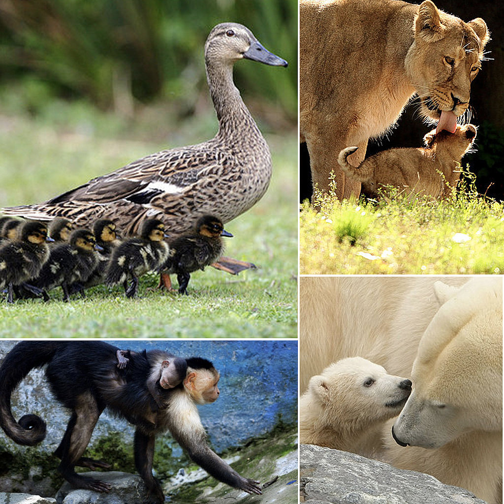 Animal Babes Wish Mom Happy Mother's Day!