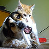 Cat Attacks Dog Playing With Toy | Video