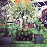 Designer Ive Haugeland from Shades of Green debuted a line of outdoor pots at the show.