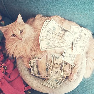 Pictures of Cats With Money