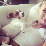 Candice Swanepoel snuggled with her dog, Milo. Source: Instagram user angelcandices