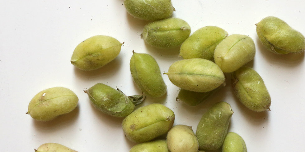 Adventures in Ingredients: Fresh Chickpeas