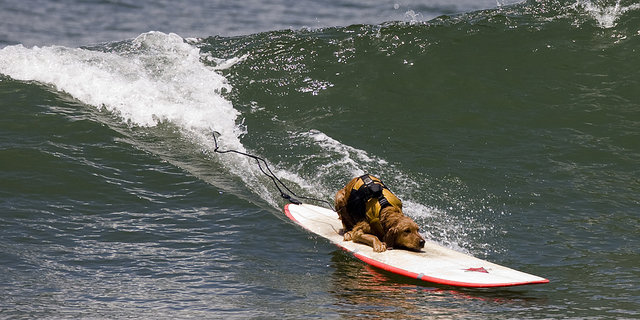 Hang Loose! Dogs of Summer Riding Boards