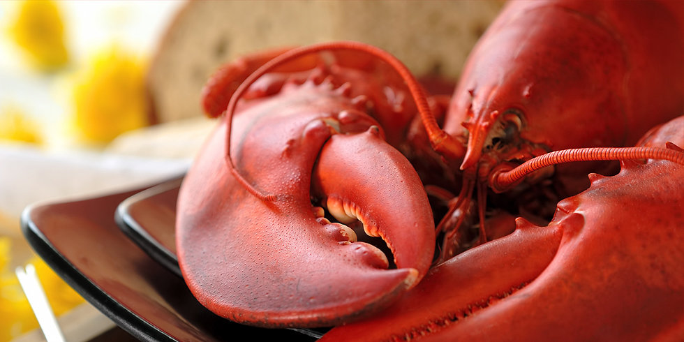 How Much American Lobster Knowledge Can You Shell Out?
