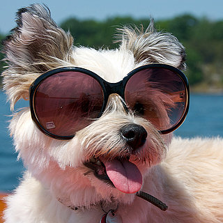 Pictures of Dogs Wearing Sunglasses