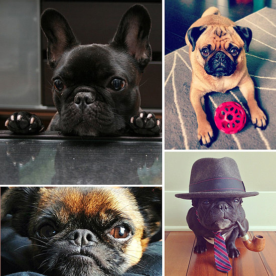 Why the Smushed Face? 11 Dogs on Instagram You'll Want to Squeeze