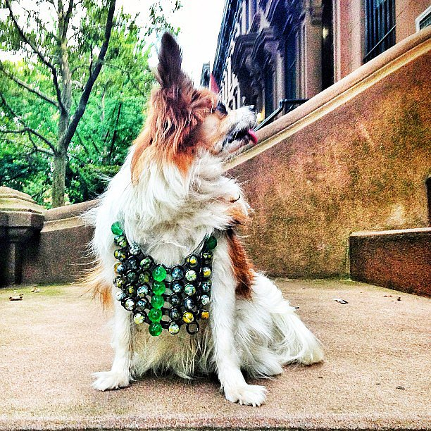Even dogs love Dannijo's bright jewels. Source: Instagram user bergdorfs