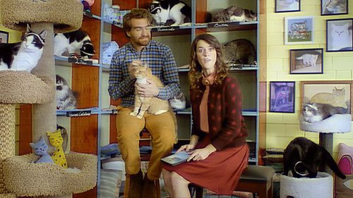 Cat Workout Commercial | Video