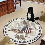 Bo Obama Instagram Picture