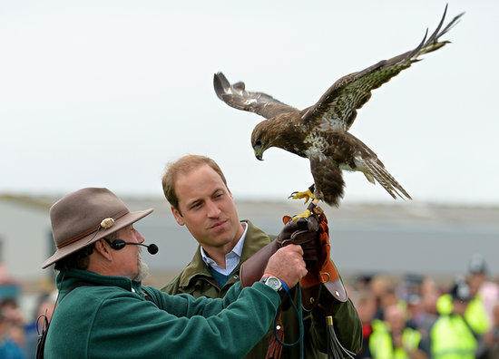 Prince William inspected a hawk.