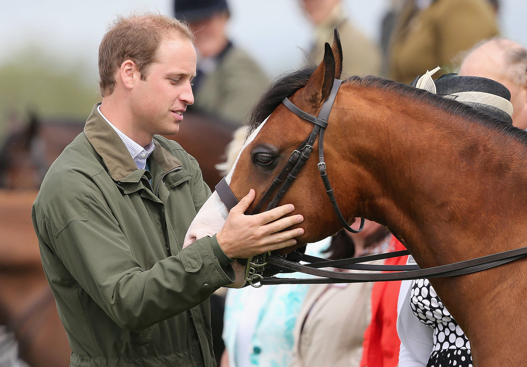 Prince William greeted a horse.