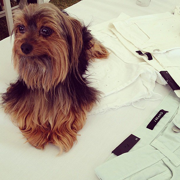 We got in on the puppy love when we spotted J Brand's guard dog. Source: Instagram user popsugarfashion