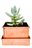 Fill this stunning copper planter ($20) with succulents for a statement accent.