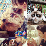 Sunshine and Snuggles Between Celebs and Animals