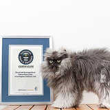 Colonel Meow Officially Has the Longest Fur