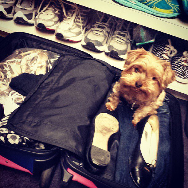 A peek into Emmy Rossum's closet reveals quite the sneaker collection (and a pretty cute dog, too)! Source: Instagram user emmyrossum
