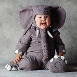 Excellent Elephant