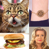 Lil Bub, Islands Burgers, and a Bracelet DIY: The Best of POPSUGARTV This Week