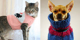 Cozy Pet Sweaters to Usher in the Autumnal Elements